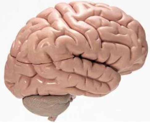 外伤性癫痫病怎么治好
